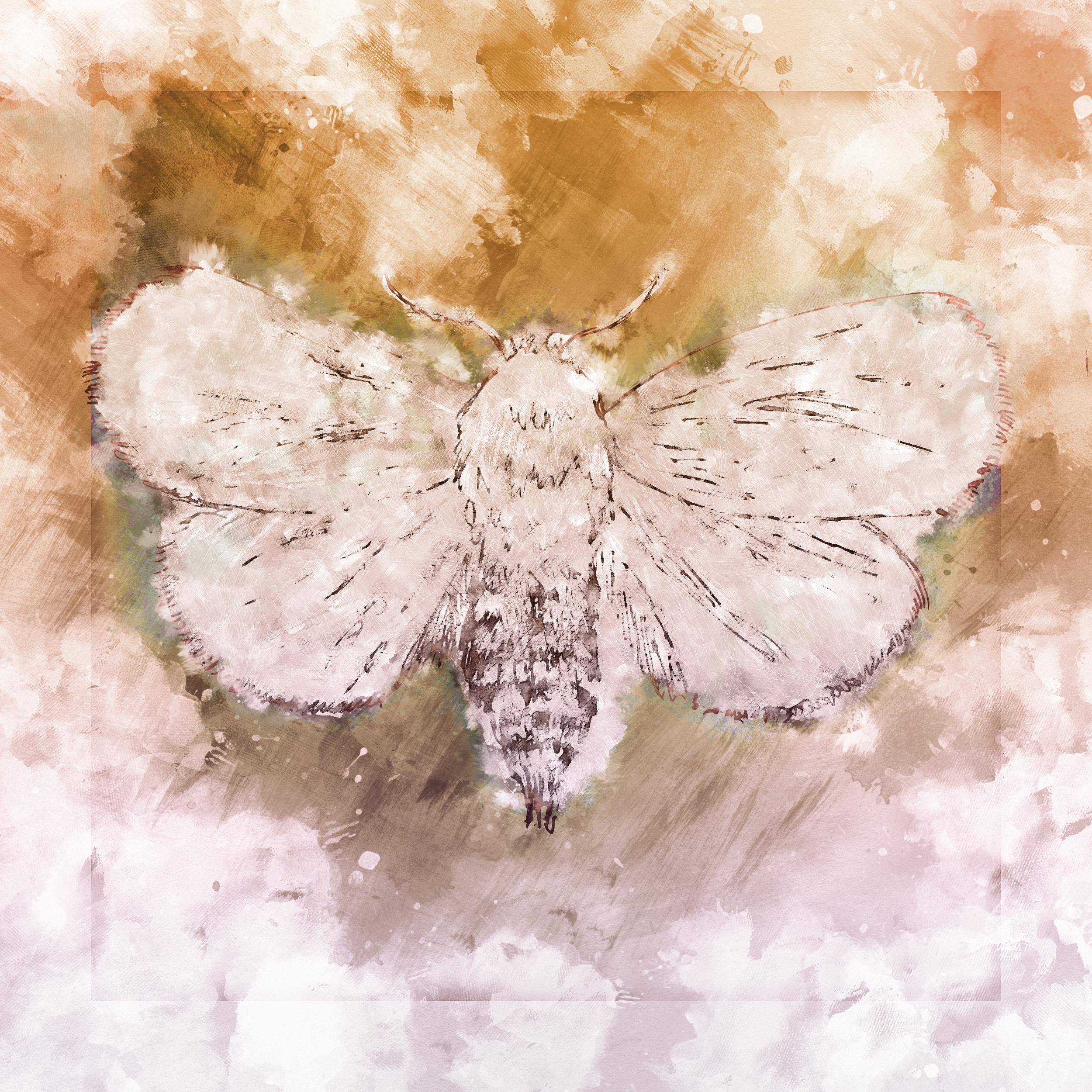 Moth_Happy